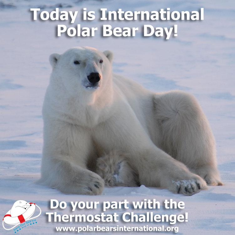 Int Polar Bear Day